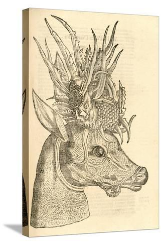 Illustration of Capreolus Polyceros from Aldrovandi's 'History of Monsters' , 1642--Stretched Canvas Print
