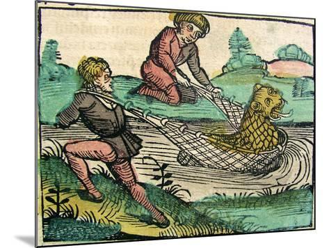 Catching a Lion Cat Fish Monster Published in the Nuremberg Chronicle, 1493--Mounted Giclee Print