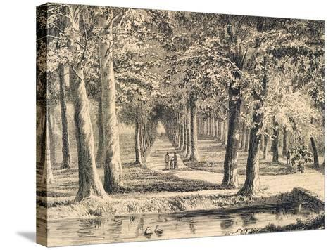 The Avenue of Plane Trees in Battaglia Terme--Stretched Canvas Print