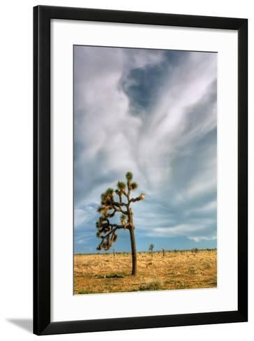 Lone Joshua Tree Landscape-Vincent James-Framed Art Print