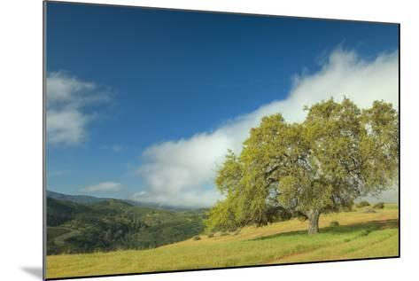 Oak Tree and Central Valley Hills, California-Vincent James-Mounted Photographic Print