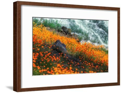 Poppies by the Merced River, Merced River Canyon-Vincent James-Framed Art Print