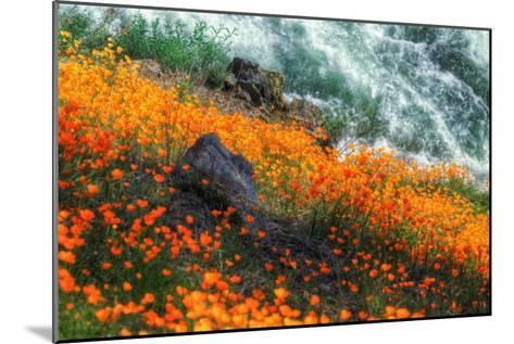 Poppies by the Merced River, Merced River Canyon-Vincent James-Mounted Photographic Print
