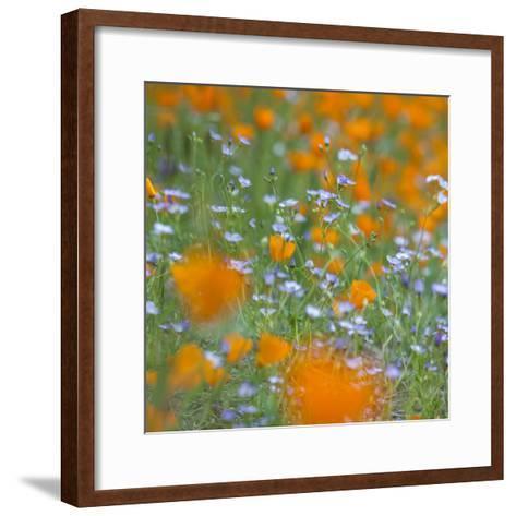 Poppy Flower Mix-Vincent James-Framed Art Print