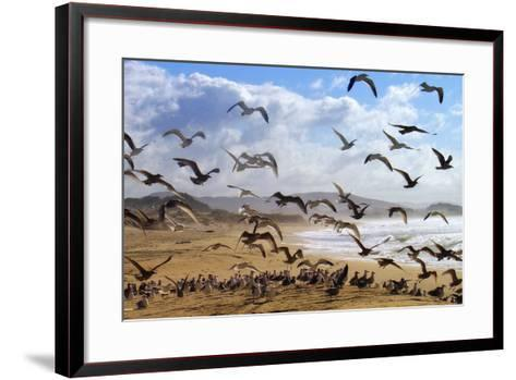 Beach Birds, Half Moon Bay, California Coast-Vincent James-Framed Art Print