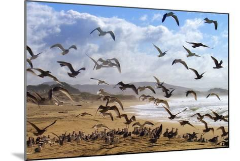 Beach Birds, Half Moon Bay, California Coast-Vincent James-Mounted Photographic Print
