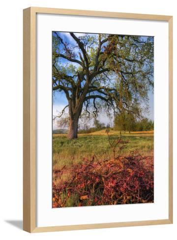 Spring Oak Scene, Central Valley, California-Vincent James-Framed Art Print
