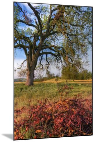 Spring Oak Scene, Central Valley, California-Vincent James-Mounted Photographic Print