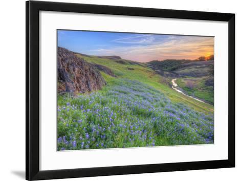 Wildflower Hillside at Sunset, Table Mountain-Vincent James-Framed Art Print