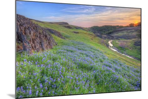 Wildflower Hillside at Sunset, Table Mountain-Vincent James-Mounted Photographic Print