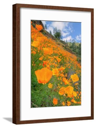 Grand Poppy Landscape Revisited, Merced Canyon-Vincent James-Framed Art Print