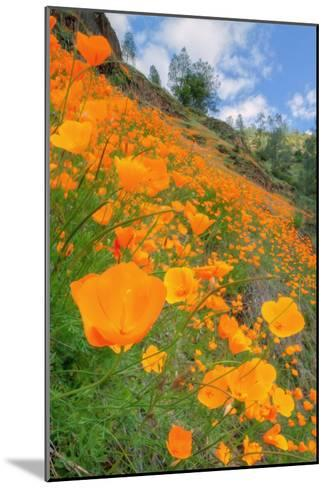 Grand Poppy Landscape Revisited, Merced Canyon-Vincent James-Mounted Photographic Print