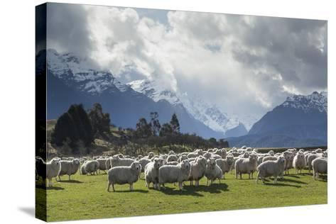 Sheep and Mountains Near Glenorchy, Queenstown, South Island, New Zealand, Pacific- Nick-Stretched Canvas Print