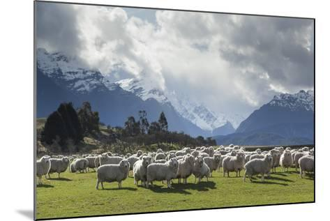 Sheep and Mountains Near Glenorchy, Queenstown, South Island, New Zealand, Pacific- Nick-Mounted Photographic Print