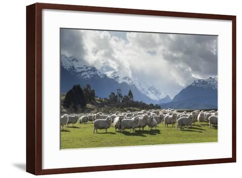 Sheep and Mountains Near Glenorchy, Queenstown, South Island, New Zealand, Pacific- Nick-Framed Art Print