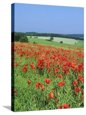 Field of Poppies, Neresheim, Swabian Alb, Baden Wurttemberg, Germany, Europe-Markus Lange-Stretched Canvas Print