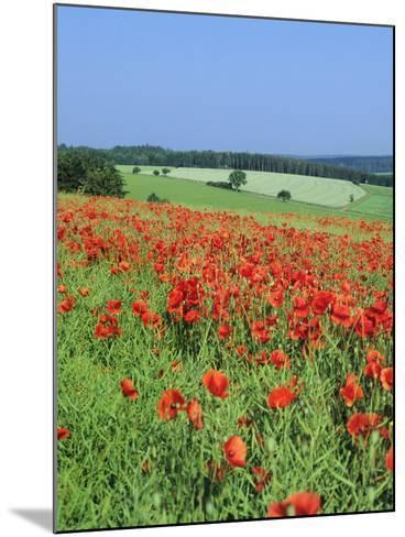 Field of Poppies, Neresheim, Swabian Alb, Baden Wurttemberg, Germany, Europe-Markus Lange-Mounted Photographic Print