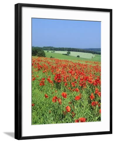 Field of Poppies, Neresheim, Swabian Alb, Baden Wurttemberg, Germany, Europe-Markus Lange-Framed Art Print