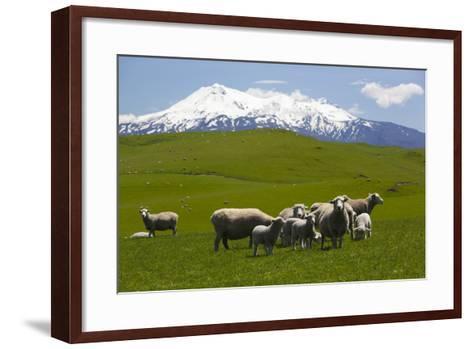 Sheep Grazing Beneath Mount Ruapehu-Stuart-Framed Art Print