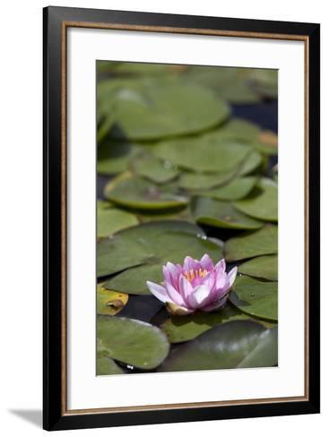 Water Lily at Rapaura Water Gardens-Stuart-Framed Art Print
