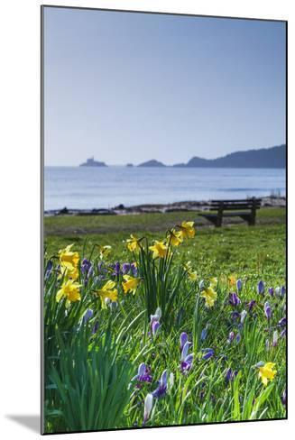 Mumbles, Swansea, Wales, United Kingdom, Europe-Billy-Mounted Photographic Print