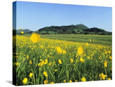 View from a Flower Meadow to Teckberg Mountain with Teck Castle-Markus Lange-Stretched Canvas Print