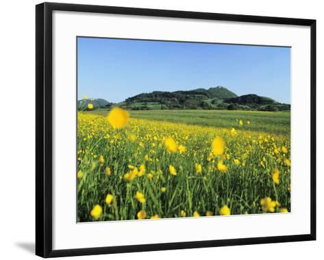 View from a Flower Meadow to Teckberg Mountain with Teck Castle-Markus Lange-Framed Art Print