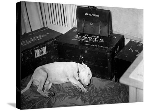 General Georg Patton's Pet Bull Terrier 'Willie'--Stretched Canvas Print