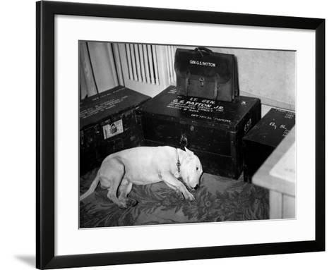 General Georg Patton's Pet Bull Terrier 'Willie'--Framed Art Print