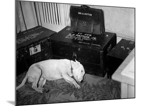 General Georg Patton's Pet Bull Terrier 'Willie'--Mounted Photo