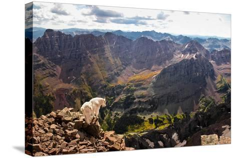 Mountain Goat Stands at the Edge of Bouldery Cliff at the Maroon Bells in Colorado-Kent Harvey-Stretched Canvas Print