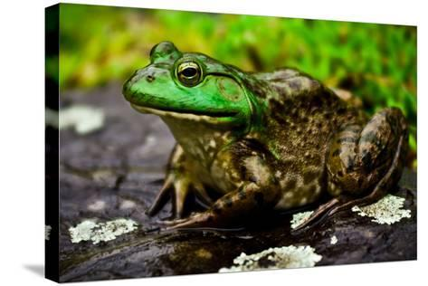 Fat Bull Frog Lords over Connecticut Water-Daniel Gambino-Stretched Canvas Print