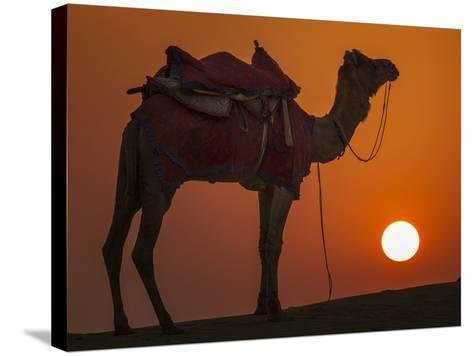 Camel Silhouetted Against the Setting Sun in the Thar Desert Near Jaisalmer, India-Frances Gallogly-Stretched Canvas Print