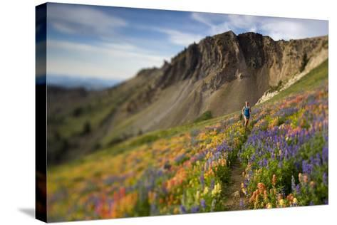 A Woman Enjoys a Morning Trail Run in a Meadow of Wildflowers at Snowbird Ski and Summer Resort, Ut-Adam Barker-Stretched Canvas Print
