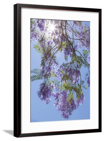 Mexico, San Miguel De Allende. Sunburst Through Jacaranda Tree-Jaynes Gallery-Framed Art Print