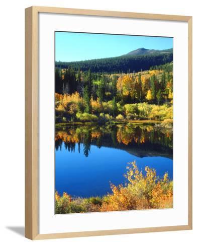USA, California, Sierra Nevada. Autumn Reflection in a Beaver Pond-Jaynes Gallery-Framed Art Print