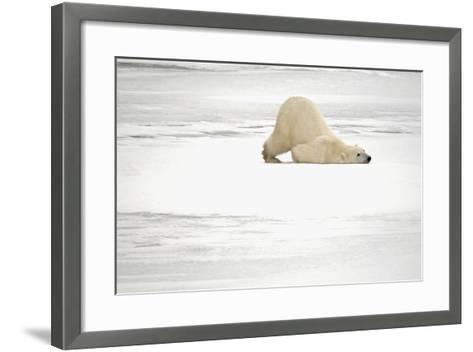 Canada, Manitoba, Churchill. Polar Bear on Frozen Tundra-Jaynes Gallery-Framed Art Print
