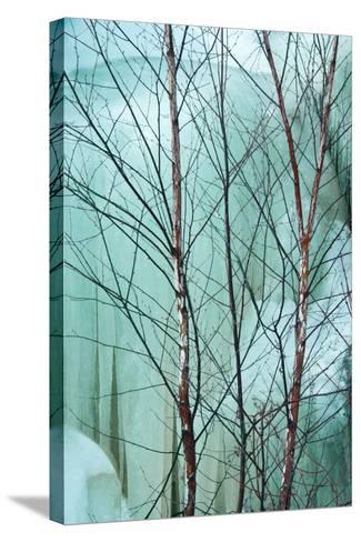 Canada, Ontario, Rabi Lake. White Birch in Front of Frozen Waterfall-Jaynes Gallery-Stretched Canvas Print