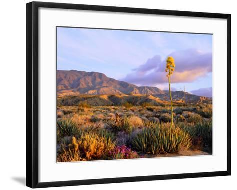 USA, California, Anza-Borrego Desert State Park. Agave Wildflowers-Jaynes Gallery-Framed Art Print