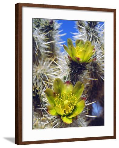 USA, California, Joshua Tree Silver Cholla Cactus Wildflowers-Jaynes Gallery-Framed Art Print