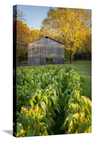 Old Tobacco Farm Along the Natchez Trace, Tennessee, USA-Brian Jannsen-Stretched Canvas Print