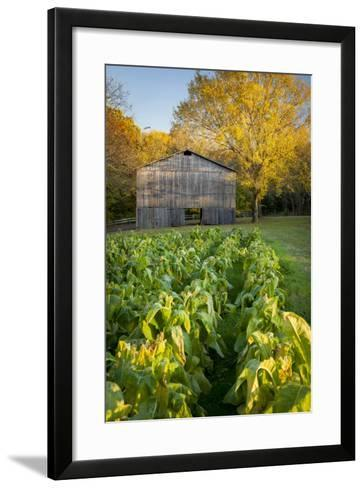 Old Tobacco Farm Along the Natchez Trace, Tennessee, USA-Brian Jannsen-Framed Art Print