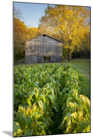 Old Tobacco Farm Along the Natchez Trace, Tennessee, USA-Brian Jannsen-Mounted Photographic Print
