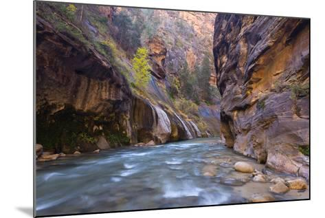USA, Utah, Zion National Park. the Narrows of the Virgin River-Jamie & Judy Wild-Mounted Photographic Print