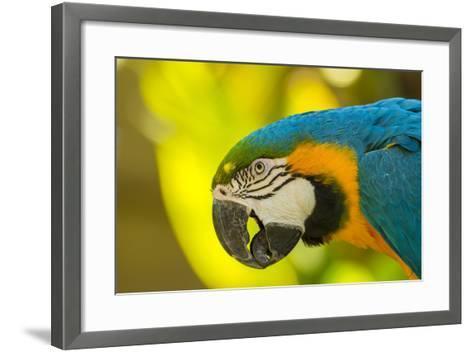 USA, California, Santa Barbara. Profile of Macaw at Santa Barbara Zoo-Jaynes Gallery-Framed Art Print