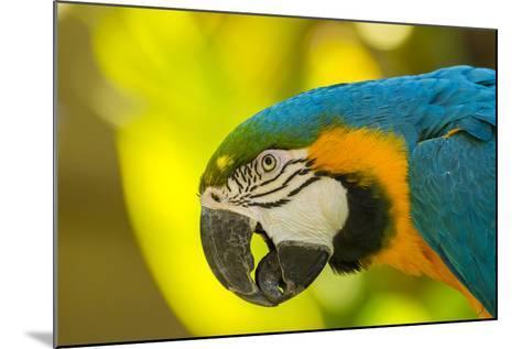 USA, California, Santa Barbara. Profile of Macaw at Santa Barbara Zoo-Jaynes Gallery-Mounted Photographic Print