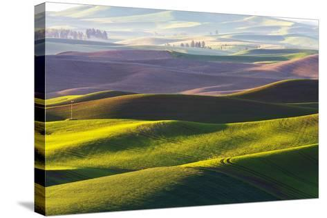 USA, Washington, Palouse. Rolling Hills Covered by Fields of Peas-Terry Eggers-Stretched Canvas Print