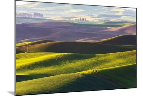 USA, Washington, Palouse. Rolling Hills Covered by Fields of Peas-Terry Eggers-Mounted Photographic Print