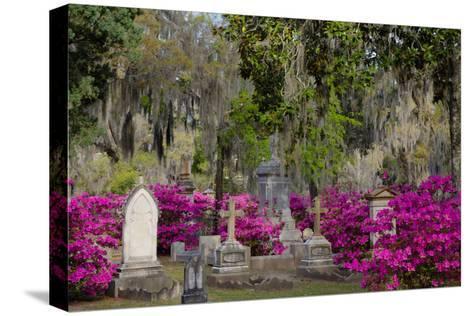 Azaleas and Headstones in Bonaventure Cemetery, Savannah, Georgia, USA-Joanne Wells-Stretched Canvas Print