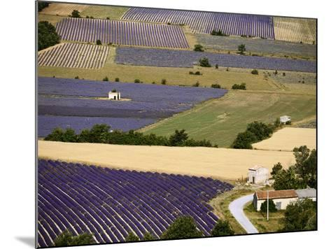 Aerial Lavender Field-David Barnes-Mounted Photographic Print